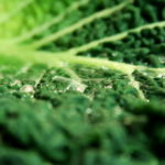 Kale Benefits And How They Affect Your Health
